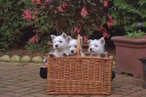 moving-pets-to-new-zealand