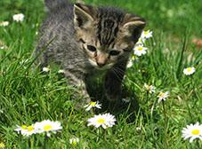 Kitten resized