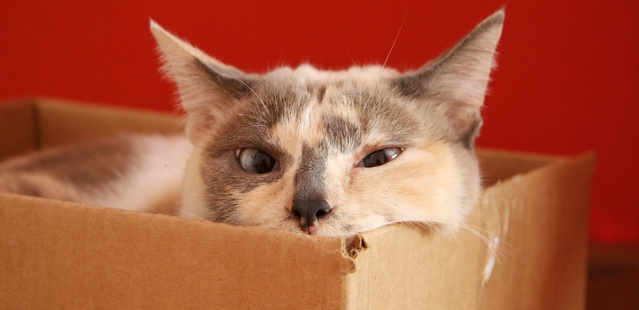 cat in a moving box.jpg